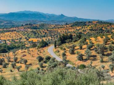 Getting to the Greek: Why Greece is the word when it comes to olive oil
